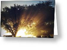 Sun rays Greeting Card by Les Cunliffe