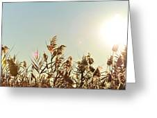 Sun Shining Over Reed Grasses Greeting Card by Tetyana Kokhanets