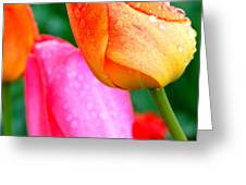 Sunday Shower Tulip Greeting Card by Christy Phillips