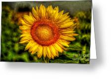 Sunflower Greeting Card by Adrian Evans
