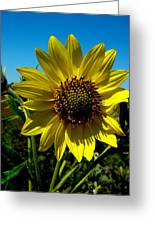 Sunflower Greeting Card by Andrea Galiffi