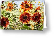 Sunflower Cluster Greeting Card by Kerri Mortenson