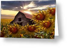 Sunflower Dance Greeting Card by Debra and Dave Vanderlaan