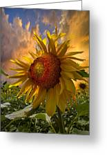 Sunflower Dawn Greeting Card by Debra and Dave Vanderlaan