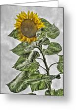 Sunflower Greeting Card by Dawn J Benko