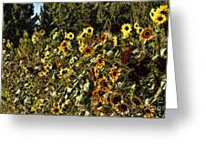 Sunflower Fields Forever Greeting Card by Peggy Hughes