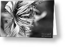 Sunflower Focus Greeting Card by Terry Rowe