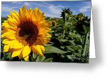 Sunflower Glow Greeting Card by Kerri Mortenson
