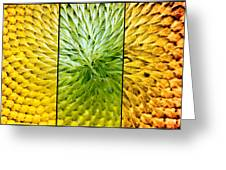 Sunflower Heart Triptych Greeting Card by Lisa Knechtel