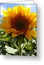 Sunflower Highlight Greeting Card by Kerri Mortenson