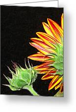Sunflower In The Making Greeting Card by Joyce Dickens