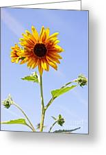 Sunflower In The Sky Greeting Card by Kerri Mortenson