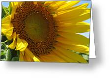 Sunflower Greeting Card by Lne Kirkes