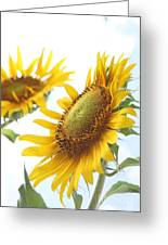Sunflower Perspective Greeting Card by Kerri Mortenson