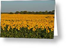 Sunflower Sea Greeting Card by Dorothy Pinder