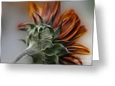 Sunflower Greeting Card by Sharon Mau