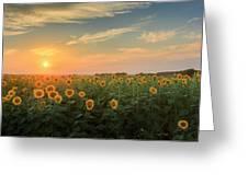 Sunflower Sundown Greeting Card by Bill Wakeley