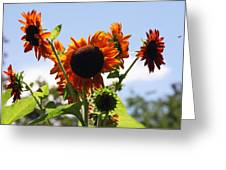 Sunflower Symphony Greeting Card by Karen Wiles