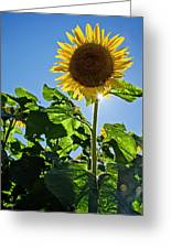 Sunflower With Sun Greeting Card by Donna Doherty