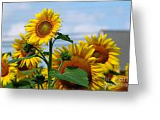 Sunflowers 1 2013 Greeting Card by Edward Sobuta