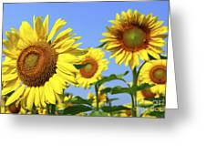 Sunflowers In Field Greeting Card by Elena Elisseeva