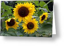 Sunflowers Greeting Card by Polly Anna