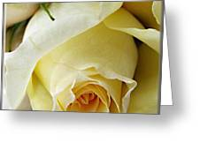Sunkissed Yellow Rose Greeting Card by Danielle  Parent
