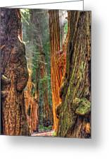 Sunlight Beams Into The Grove Muir Woods National Monument Late Winter Early Afternoon Greeting Card by Michael Mazaika
