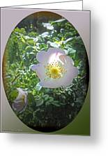 Sunlight On The Wild Pink Rose Greeting Card by Patricia Keller