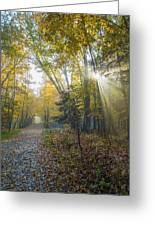 Sunlight Streaming Through The Trees Greeting Card by Jacques Laurent