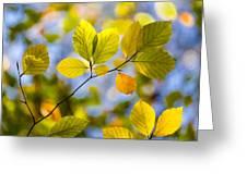 Sunlit Autumn Leaves Greeting Card by Natalie Kinnear