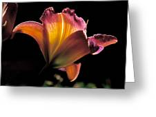 Sunlit Lily Greeting Card by Rona Black