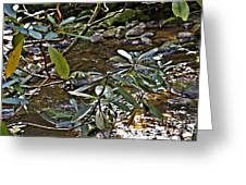 Sunlit Mountain Laurel Greeting Card by JW Hanley
