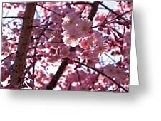 Sunlit Pink Blossoms Greeting Card by Rona Black