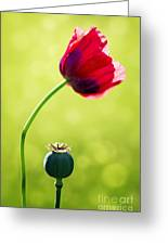 Sunlit Poppy Greeting Card by Natalie Kinnear