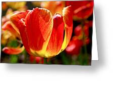 Sunlit Tulips Greeting Card by Rona Black