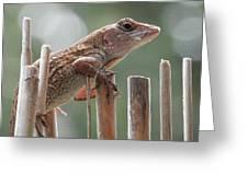 Sunning Lizard Greeting Card by Belinda Lee