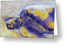 Sunning Turtle Greeting Card by Carolyn Jarvis