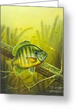 Sunny Day Panfish Greeting Card by Jon Q Wright