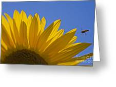 Sunny Fly By Greeting Card by Nick  Boren