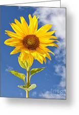 Sunny Sunflower Greeting Card by Joshua Clark