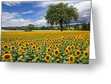 Sunny Sunflowers Greeting Card by Debra and Dave Vanderlaan