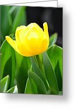 Sunny Yellow Tulip Greeting Card by Maria Urso