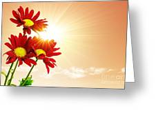 Sunrays Flowers Greeting Card by Carlos Caetano