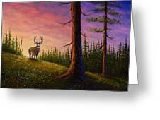 Sunrise Buck Greeting Card by C Steele