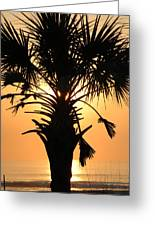 Sunrise Palm  Greeting Card by Joanne Askew