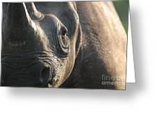 Sunrise Rhino Greeting Card by Alison Kennedy-Benson