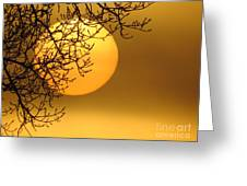 Sunrise through the Fog Greeting Card by David Lankton