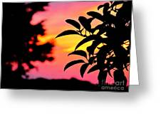 Sunset 365 61 Greeting Card by Tina M Wenger