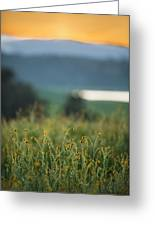 Sunset Field Greeting Card by Mike Lee